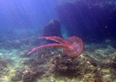Colourful Mediterranean Diving